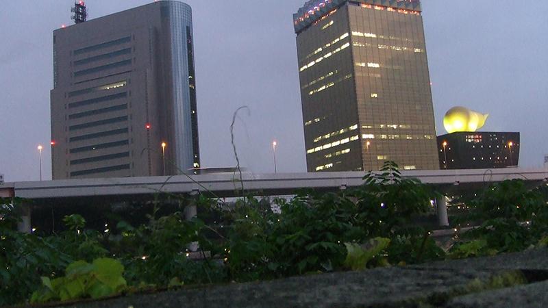 夕方の隅田川テラス