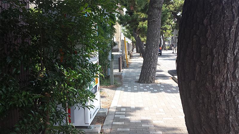 茅ヶ崎の松並木