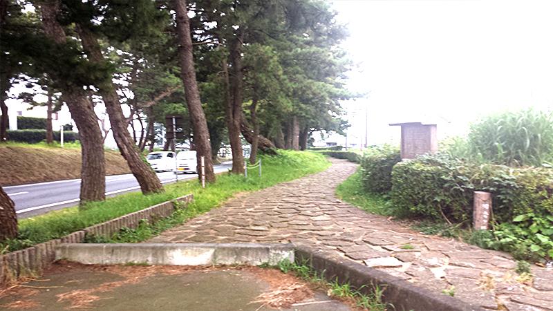 初音の松並木