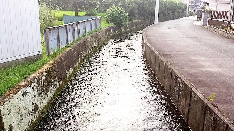 三島の小川