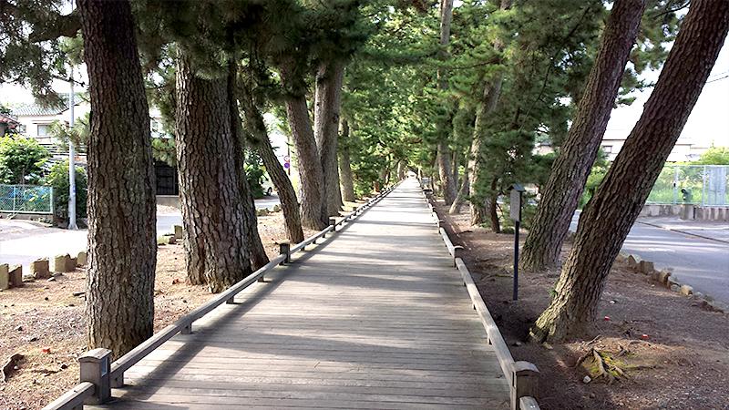 三保松原松並木