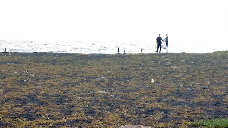 三保松原海岸とボランティア