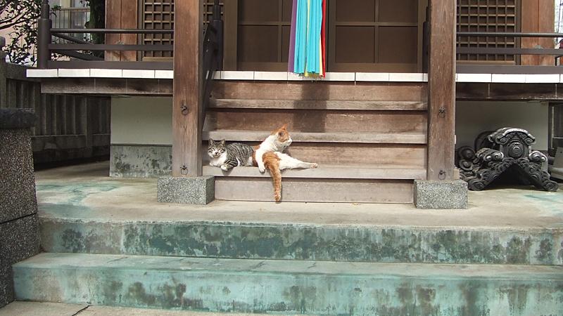 原公園は田丸稲荷神社 神社にいる猫