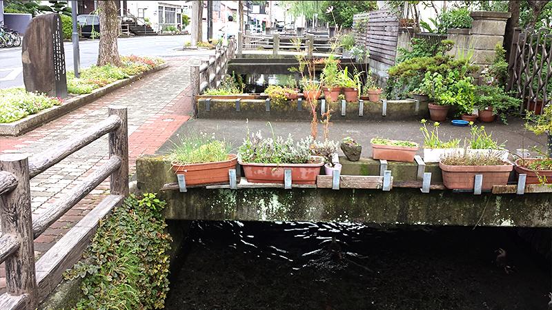 三島の街の小川