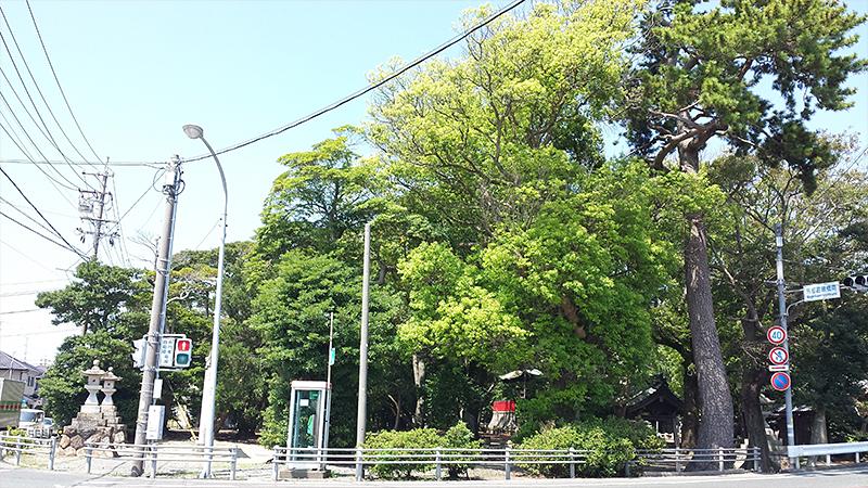 神社社の森