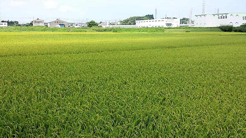 掛川の田園風景
