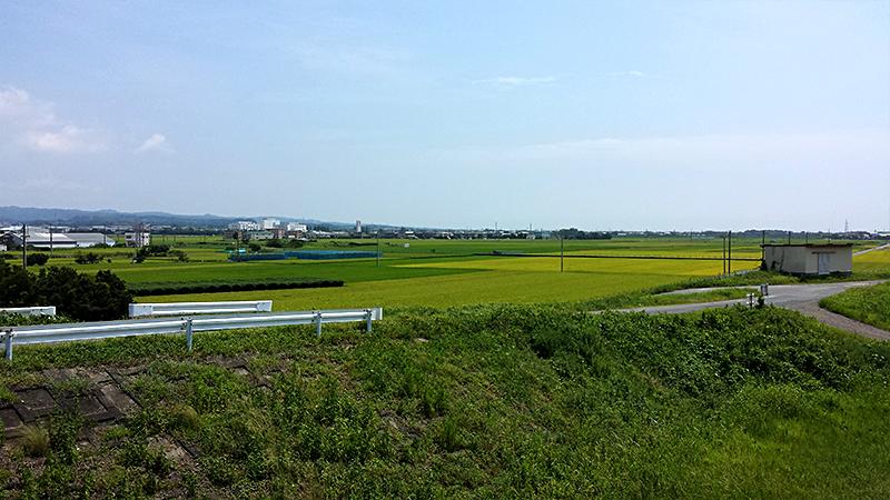 磐田市の田園風景