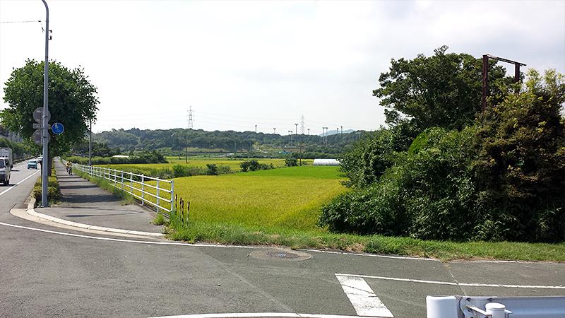 立岩街道の田園風景