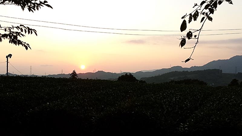 日坂の茶畑山に沈む夕日
