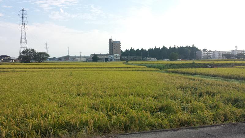 水口の田園風景