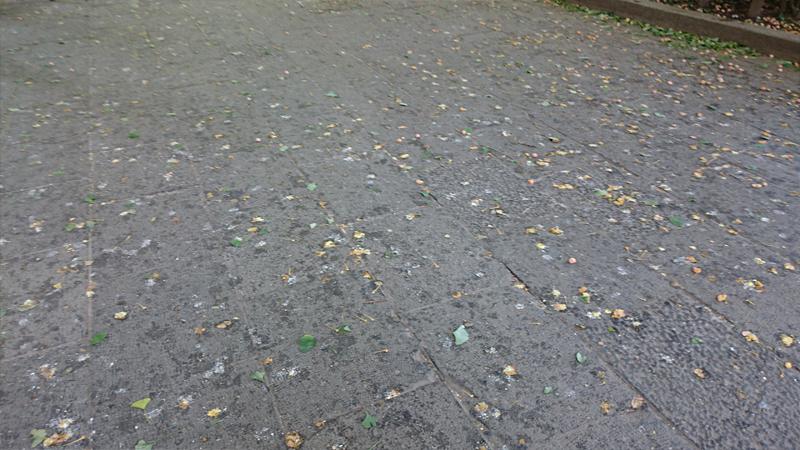 上野公園の銀杏の跡