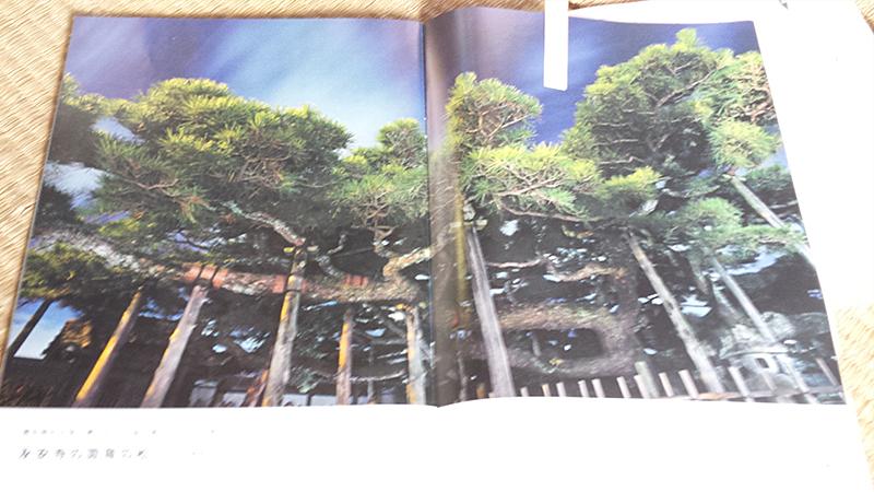 JR東海のパンフレットに掲載された見開きの雲竜の松の写真