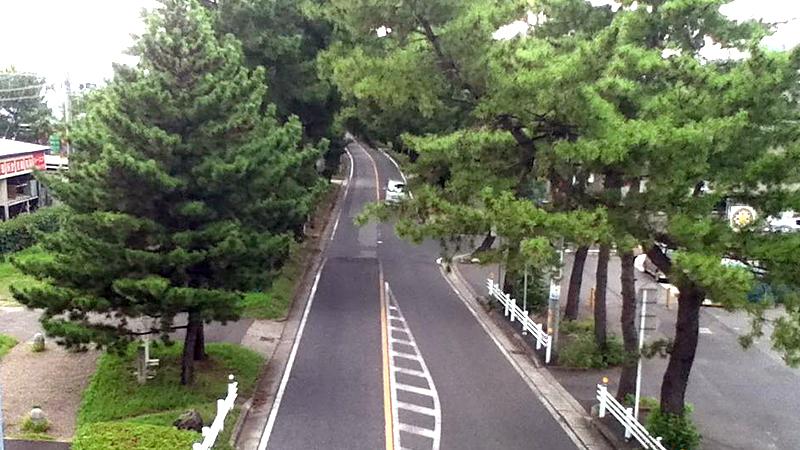 知立宿の松並木