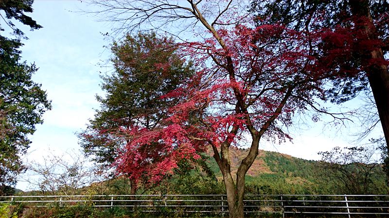 紅葉と山間