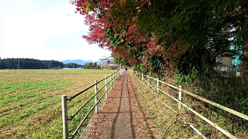 紅葉と高原道