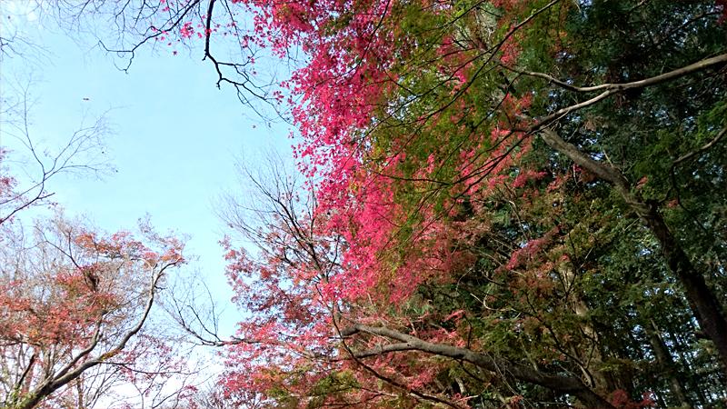 彩り豊かな自然の風景