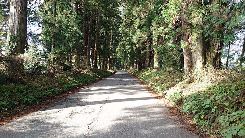 日光街道の杉並木