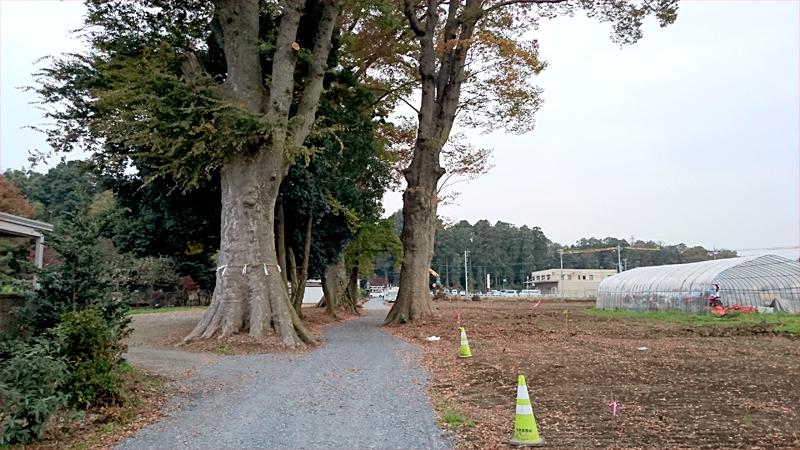 天然記念物樹齢400年以上のケヤキ