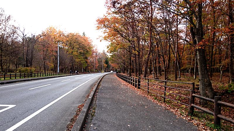 日本離れした紅葉風景
