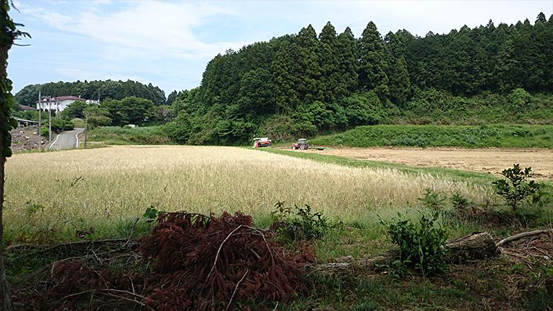 早乙女坂の古戦場跡
