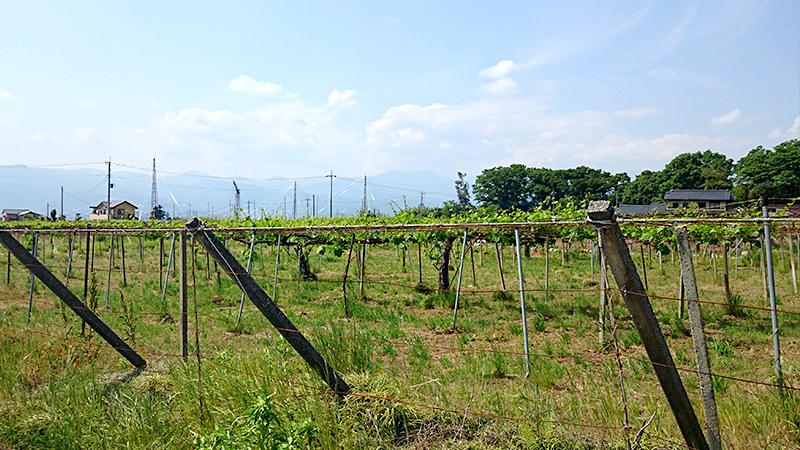 勝沼のぶどう畑