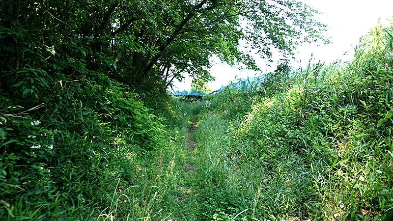 甲州街道の古道と生い茂る草木
